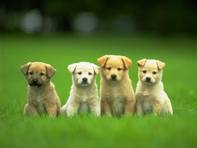 I Demand More Puppies On Television And Everywhere Else Snotting