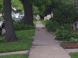 Even the street rodents are adorable and picturesque.